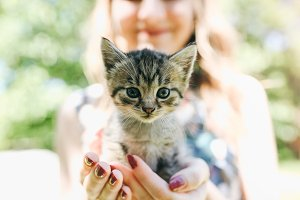 Small cute kitten in hands