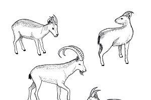 Sketch Farm Animals Collection