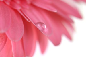 Flower with water drop.