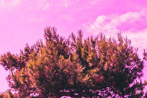 tree against the pink sky