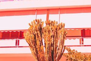 cactus and hotel