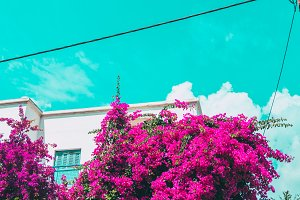 rose flower bushes and a hotel.