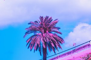palm and hotel in pink