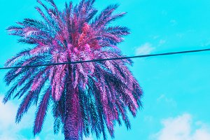 purple palm against the sky.