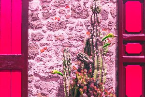 cactus against a stone wall