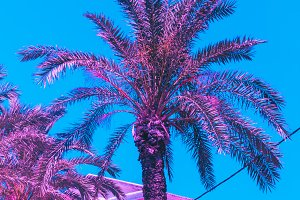 pink palm trees and hotel. bright
