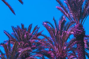 pink palm trees against the blue sky