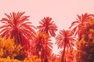 Orange tropics