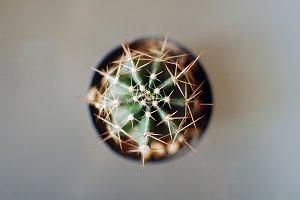 Aerial Cactus