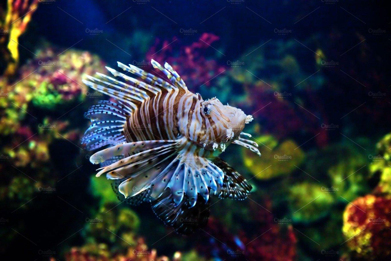 Fish in aquarium nature photos creative market for 94 1 the fish