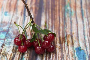 A branch of red cherry. Fresh cherry