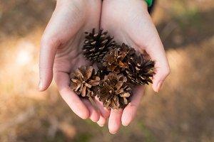 Brown pinecones in the hands