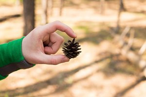 Brown pinecone in the hands