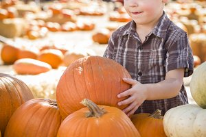Little Boy Gathering His Pumpkins at