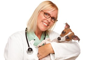 Attractive Female Doctor Veterinaria