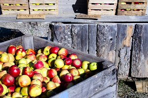 variety of apples in stall with sal