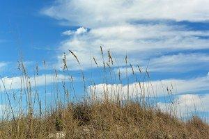 Sea Oats Blue sky.jpg