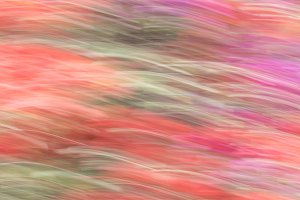 Abstract background, image of azalea
