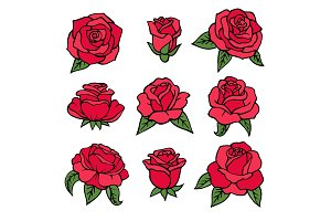 Illustrations of plants. Red roses