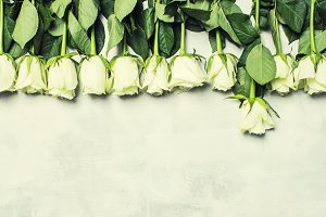 Spring white roses, gray background,