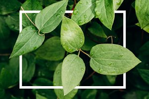 A creative layout of green leaves
