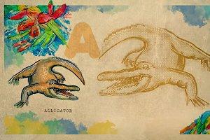 English alphabet , Alligator