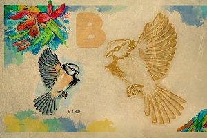 English alphabet , Bird