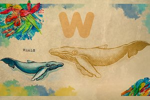 English alphabet , Whale