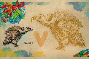 English alphabet , Vulture