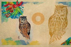 English alphabet , Owl