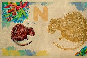 English alphabet , Nutria
