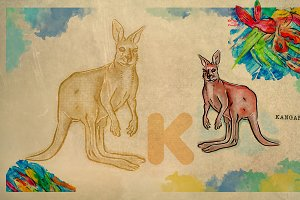 English alphabet , Kangaroo