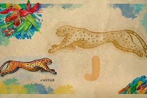English alphabet , Jaguar