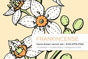 Frankincense hand-drawn vector set