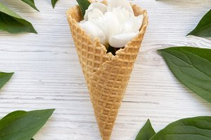 Sweet waffle cone with white peony