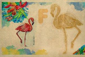 English alphabet , Flamingo