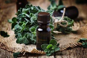 Organic essential oregano oil in a g