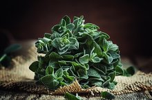 Fresh green oregano or Origanum vulg by  in Food & Drink
