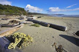Coast on island Vancouver, logs, sea