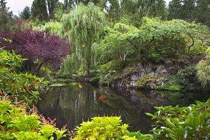 Pond in a garden.