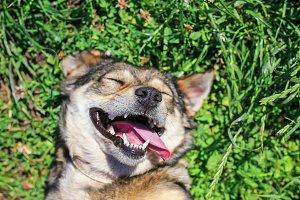 счастливая собака на зеленой траве