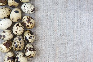 Quail eggs, top view. Copy space.