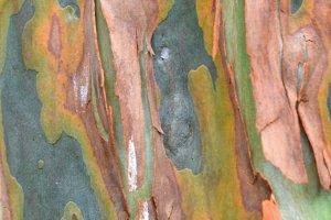 Colorful Bark