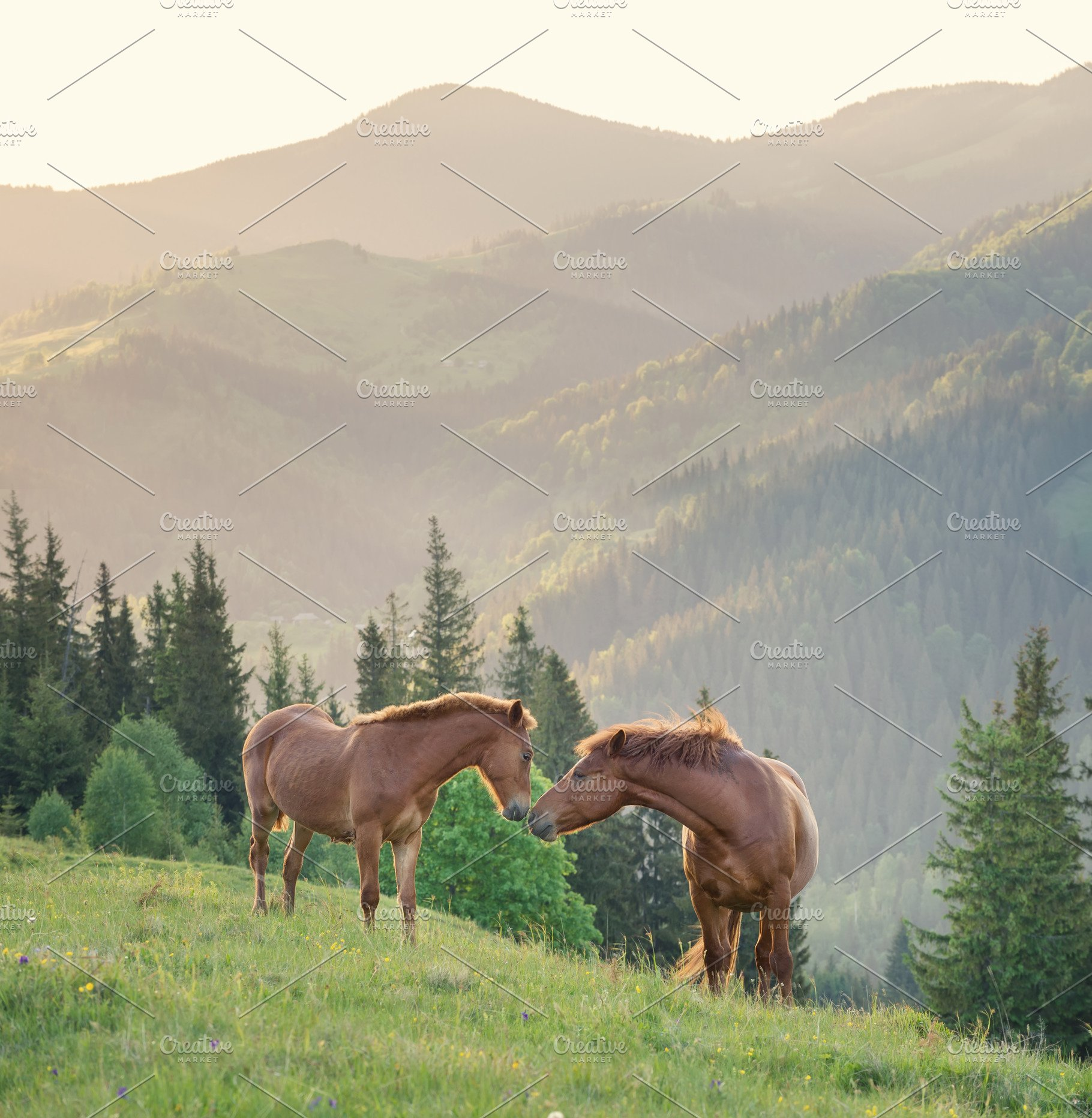 Horses Couple On The Mountain Field