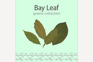 Bay Leaf Image