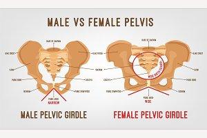 Female Male Pelvis
