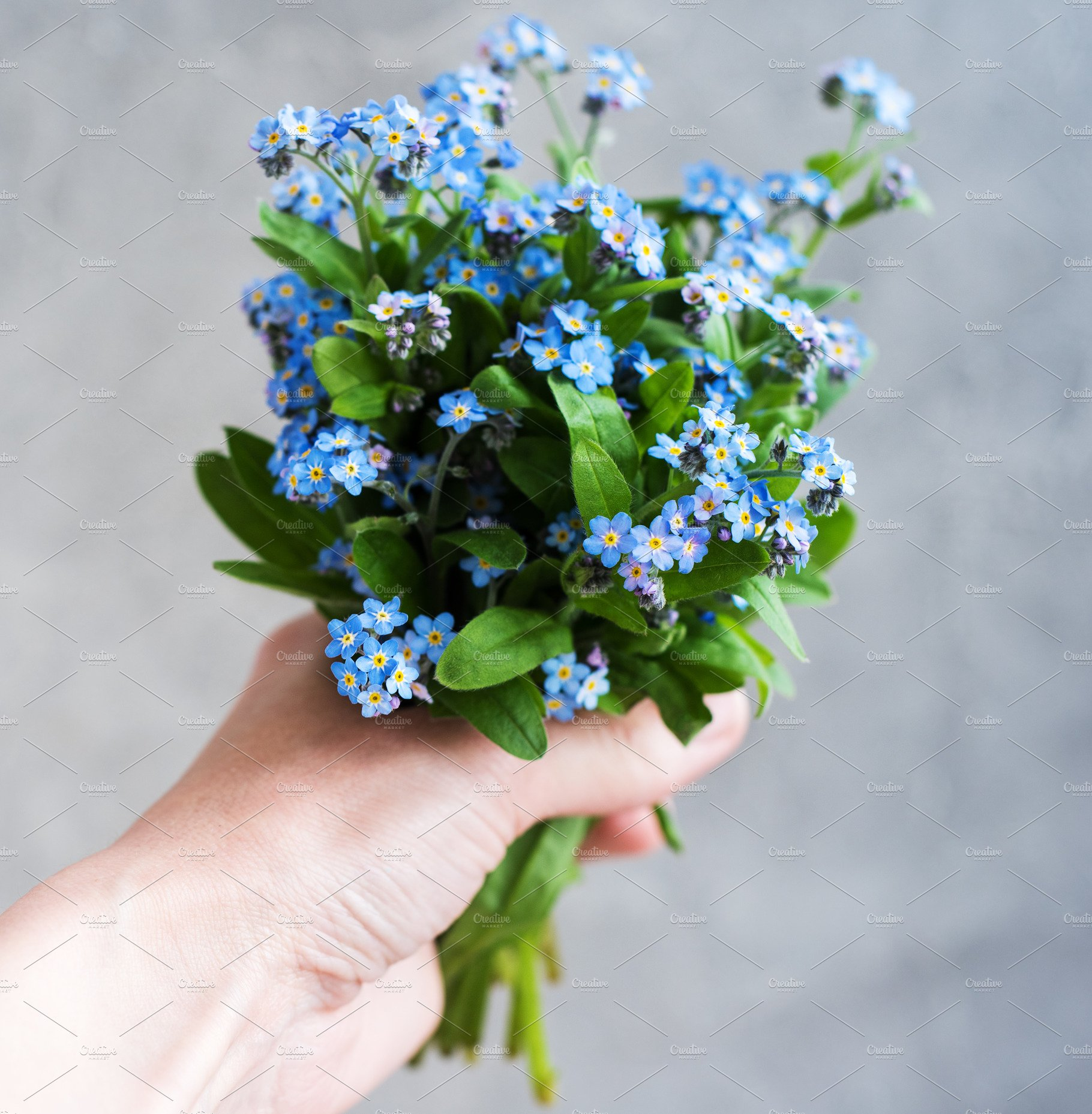 Forget Me Not Flowers In Hand Nature Photos Creative Market