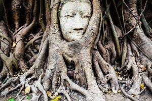 Buddha Head in a Fig Tree, Thailand