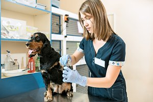 The medicine, pet care and people