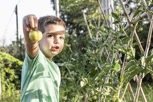 Little boy showing a green tomato